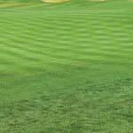 Grass Seed for Golf Courses