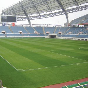 Grass Seed for Stadiums