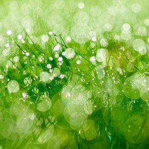Dew Control