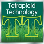 Grass Seed with Tetraploid Technology