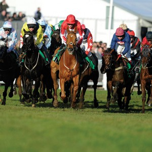 Grass Seed for Racecourses