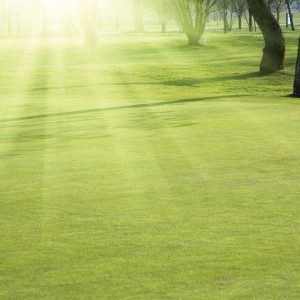 Grass Seed for Fine Turf