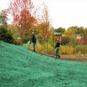 Grass Seed for Terraseeding & Hydroseeding